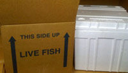 """Picture of Lobster Box Kit Includes 26 x 19 1/2 x 10"""" Box"""