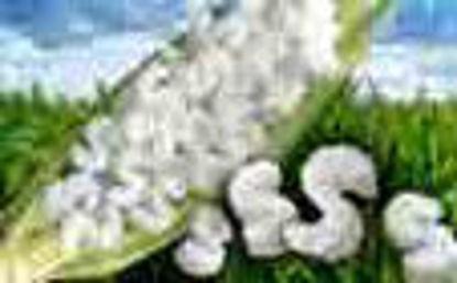 Picture of Peanuts White - 14 CU FT Bio-Degradable